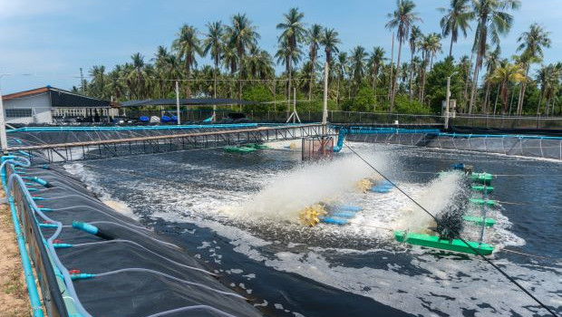 Shrimp farm KTn Farm in Thailand